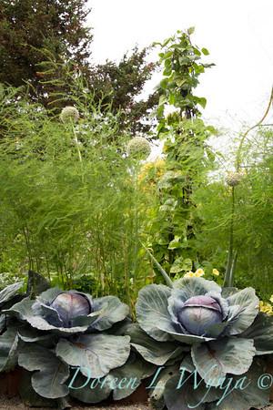 Cabbage_9413