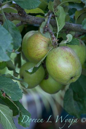 green apples_635