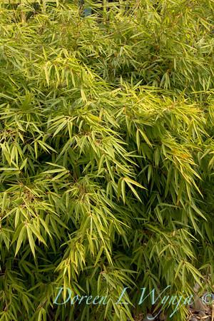 Bamboo_9281