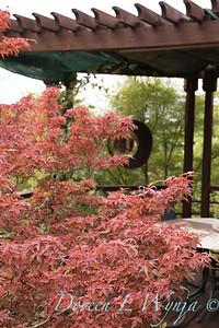 Olga and Ron's Asian Garden_1033