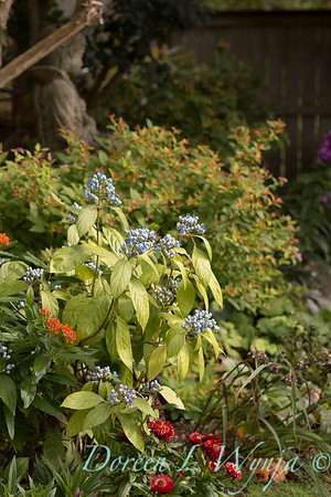 Olga and Ron's Asian Garden_1031