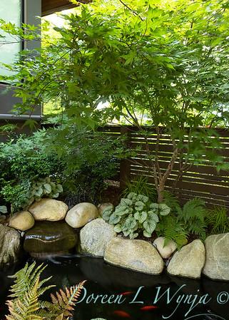 Orange acents in the Garden_6542