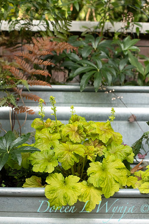 Orange acents in the Garden_6547