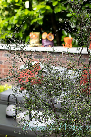 Orange acents in the Garden_6521