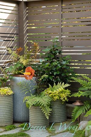 Orange acents in the Garden_6508