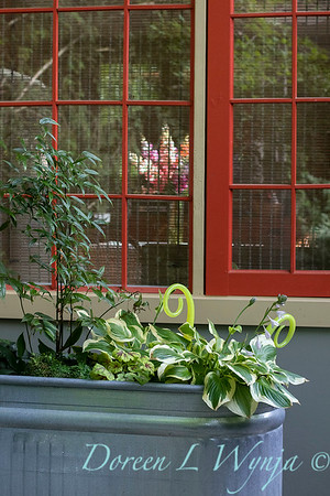 Orange acents in the Garden_6548