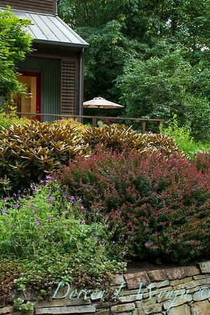 Berberis thunbergii Crimson Pygmy - Geranium Nimbus - Rhododendron Cinnamon Bear_2362
