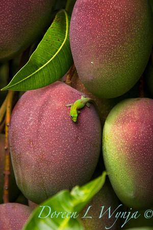 Mango's_309