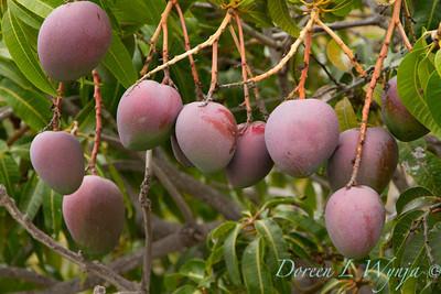 Mango's_304