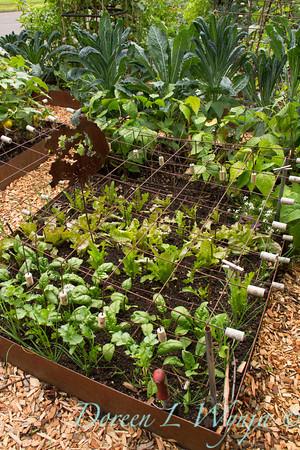 Urban Vegetable Garden - plant protection_3706