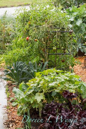 Urban Vegetable Garden_3700
