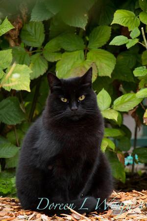 Garden black cat_3938
