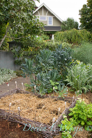 Urban Vegetable Garden - composting_3680