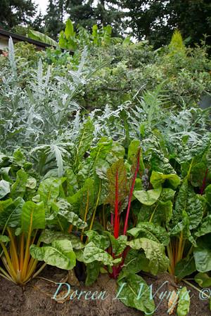Beta vulgaris subsp  cicla - Urban vegetable garden_3665