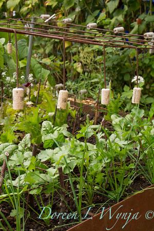 Urban Vegetable Garden - plant protection_3703