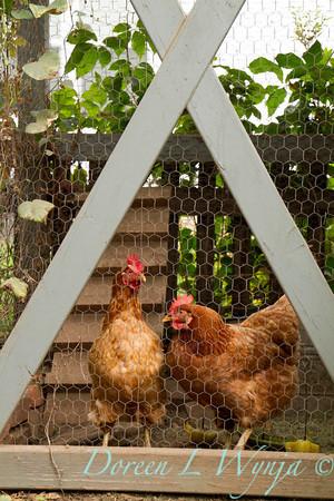 Chicken coop_3873