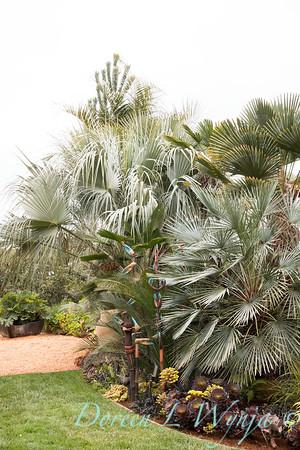 Brahea armata var  Clara - Chamaerops humilis var  cerifera - tropical landscape_3826
