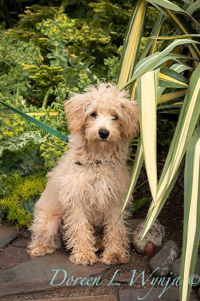Teddy garden dog_8488