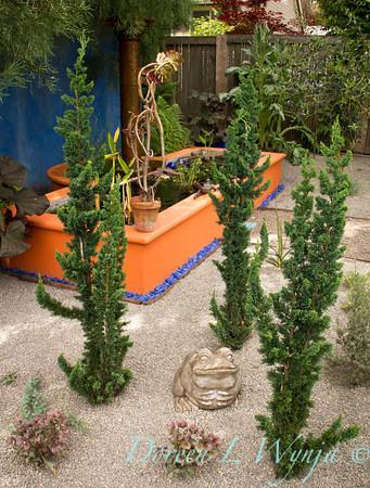 Chamaecyparis lawsoniana Wissel's Saguaro_713
