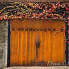 Parthenocissus tricuspidata 'Veitchii' - Rusted garage doors_0350
