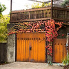 Parthenocissus tricuspidata 'Veitchii' - Rusted garage doors_0344
