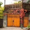 Parthenocissus tricuspidata 'Veitchii' - Rusted garage doors_0344