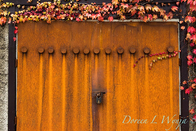 Parthenocissus tricuspidata 'Veitchii' - Rusted garage doors_0353-2