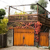 Parthenocissus tricuspidata 'Veitchii' - Rusted garage doors_0347