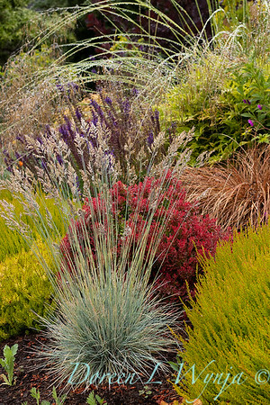 Stacie Crooks - a garden of color and texture_2029