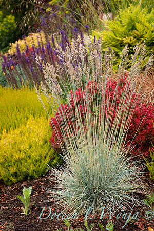 Stacie Crooks - a garden of color and texture_2020