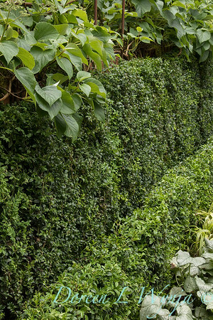 Ann and Jim's Garden_113