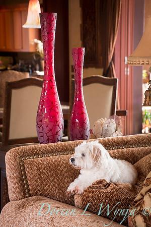 Lola white dog_9136