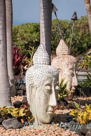 Buddha head_9039