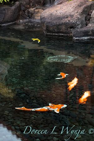 Entryway - koi pond_9199