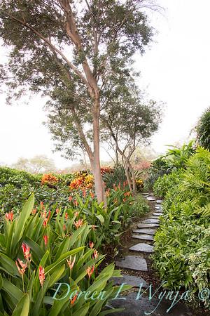 Tropical garden path - Heliconia psittacorum - Phymatosorus fern_3531