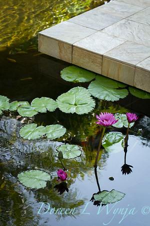 Lotus pond_3586