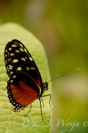Butterfly_7311