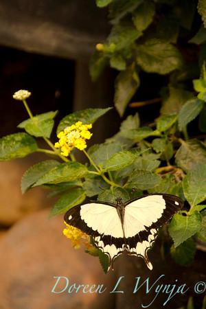 Butterfly_7388