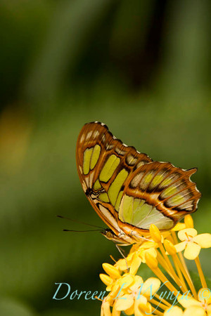 Butterfly_7336