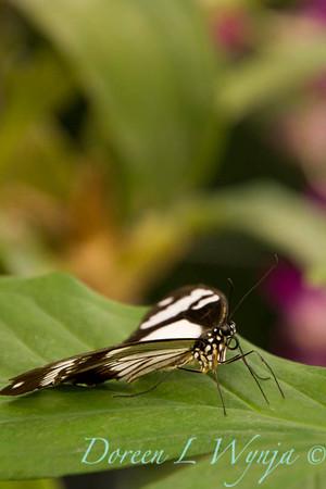Butterfly_7303