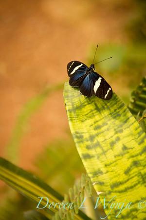 Butterfly_7444