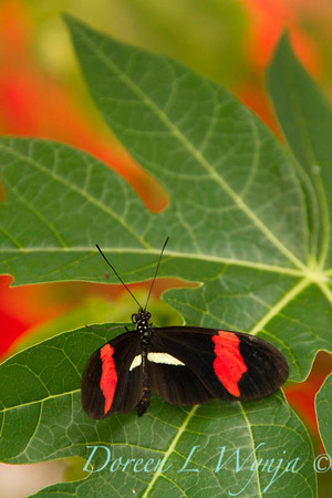 Butterfly_7230