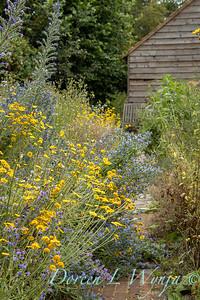 Beechleigh Garden - Jacky O'Leary garden designer_2966