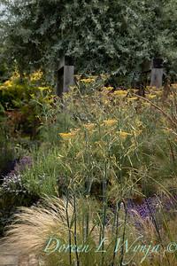 Beechleigh Garden - Jacky O'Leary garden designer_2980