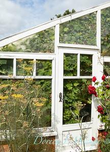 Beechleigh Garden - Jacky O'Leary garden designer_2970