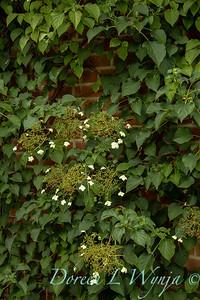Beechleigh Garden - Jacky O'Leary garden designer_2995