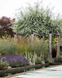 Beechleigh Garden - Jacky O'Leary garden designer_2975