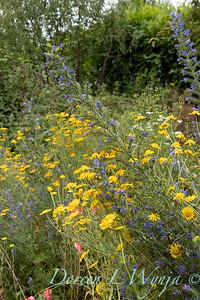 Beechleigh Garden - Jacky O'Leary garden designer_2967