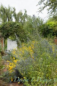 Beechleigh Garden - Jacky O'Leary garden designer_2968
