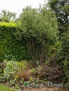 Beechleigh Garden - Jacky O'Leary garden designer_2964